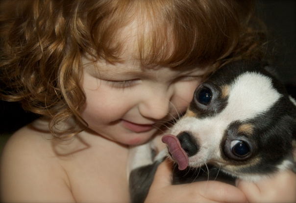 toddler hugging her chihuahua dog