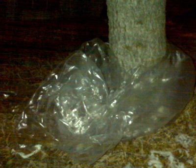 plastic wrapped around our tree