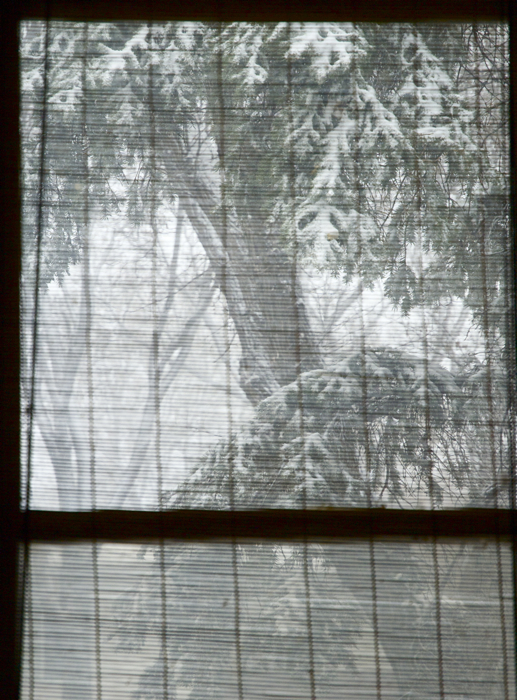 the view through my bamboo blinds, the big evergreen in our front yard.