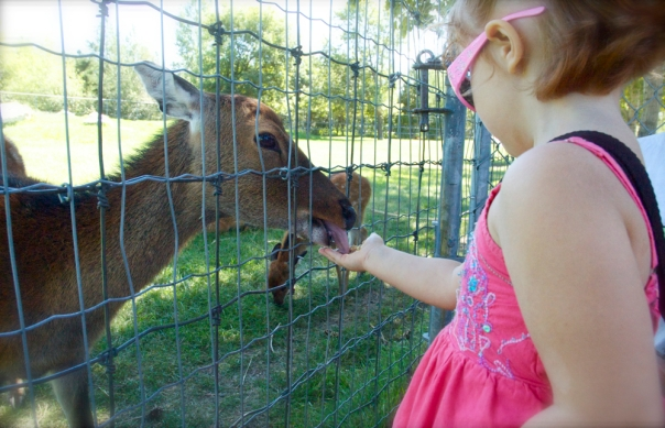 the wee girlie feeding a Sika yearling.
