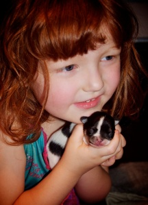 the wee girlie holding Alice, the spotty Chihuahua puppy.