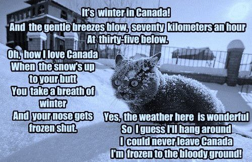 Winter Cat - an image and poem I downloaded from FB