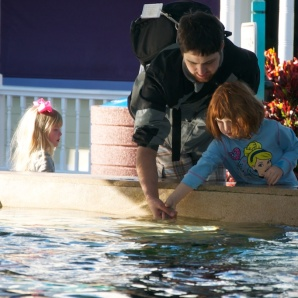Feeding the Stingrays was very cool, and something everyone enjoyed.