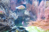 Getting an inside view of an aquarium.